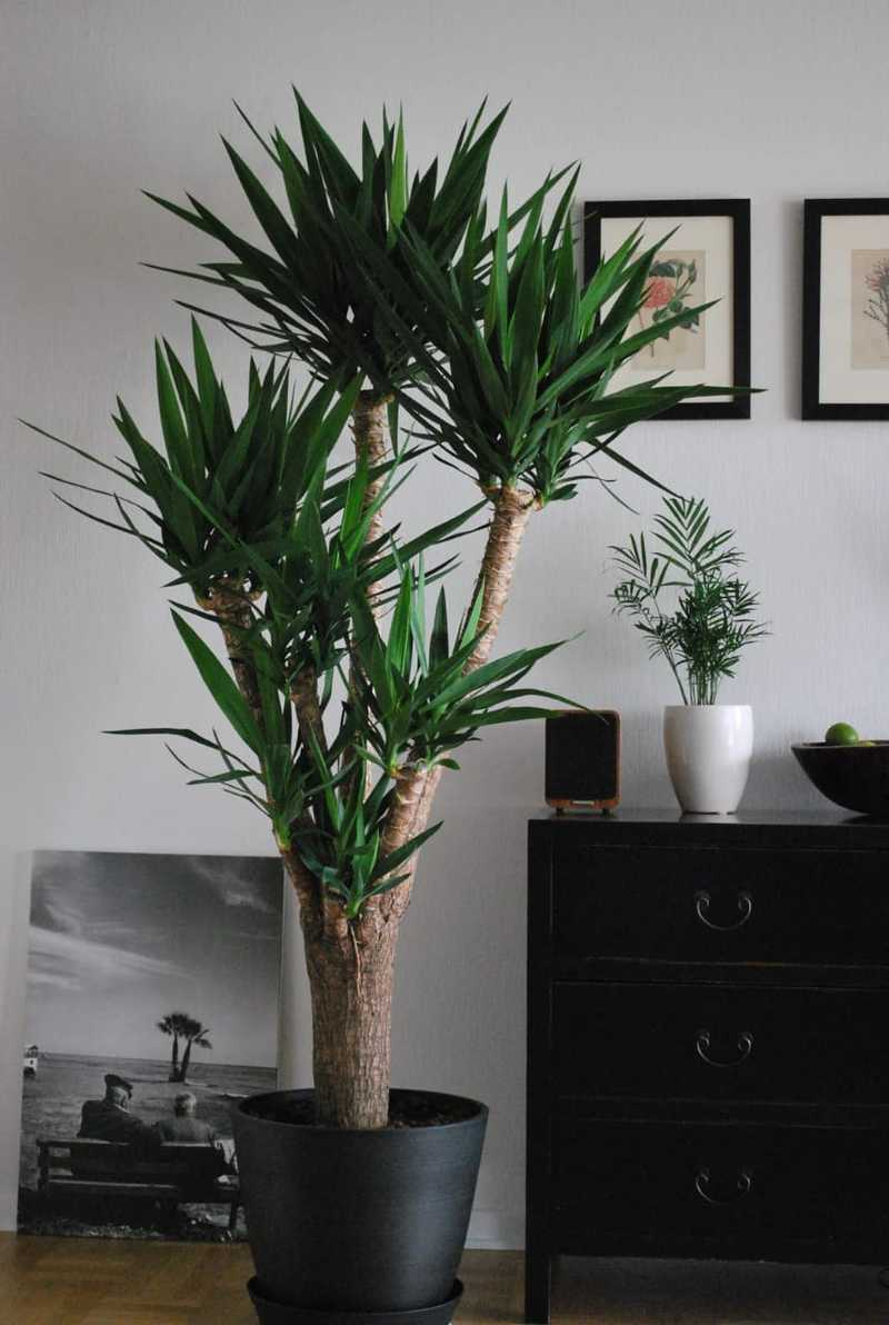 Scintillate your apartment with Eye-catching indoor plants